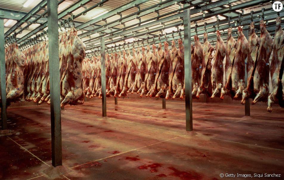Un abattoir en Espagne