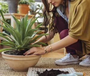 5 plantes vertes qui devraient vous aider à mieux dormir