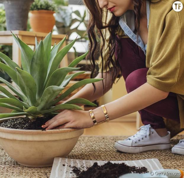 5 plantes vertes qui devraient vous aider mieux dormir terrafemina. Black Bedroom Furniture Sets. Home Design Ideas
