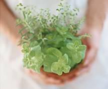 6 bonnes raisons de faire pousser de la menthe chez soi