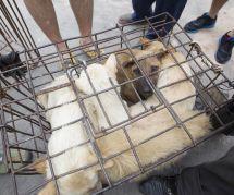 Le plus grand marché de viande de chien en Corée du Sud va (enfin) fermer ses portes