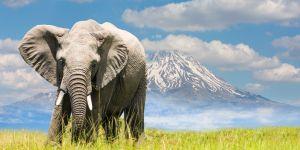 Pourquoi vous devriez regarder des documentaires animaliers