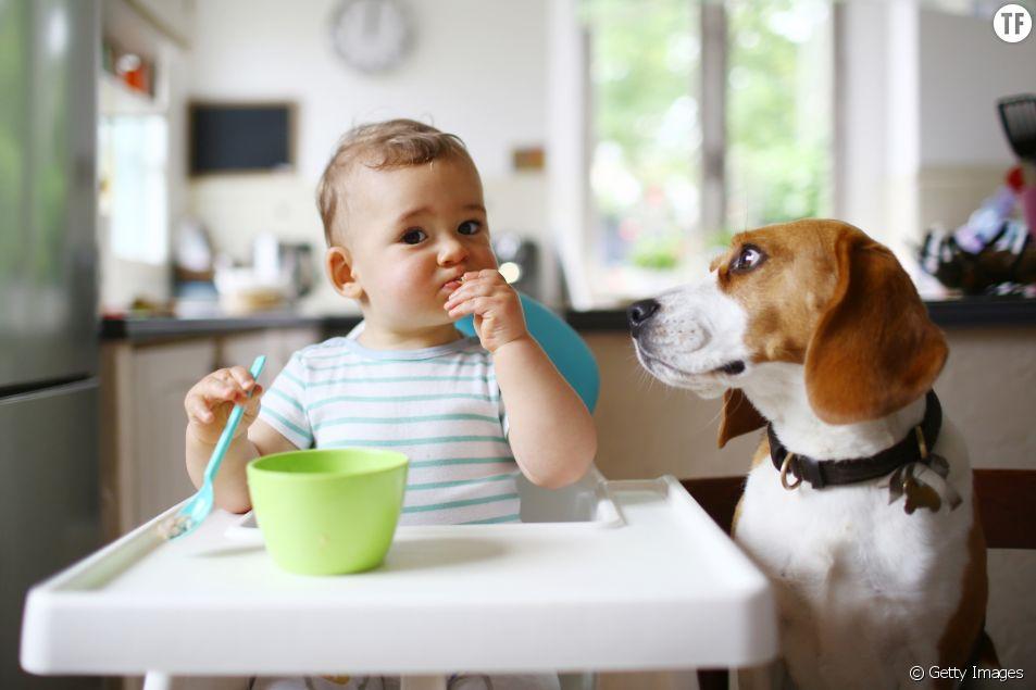 Les chiens, bons pour la santé des bébés