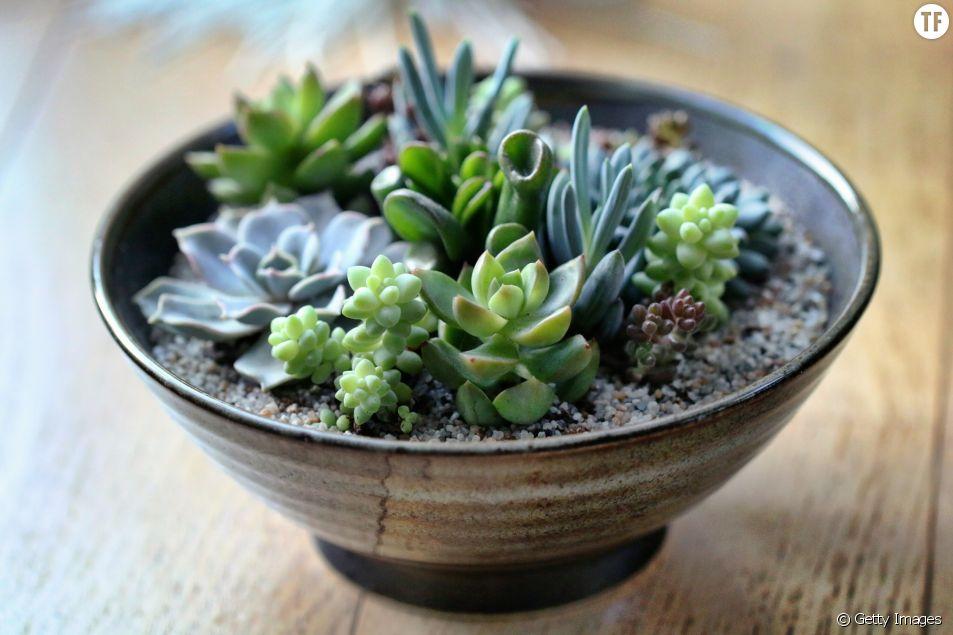 Votre passion pour les plantes vous fera vivre plus longtemps