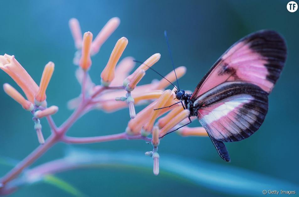 6 conseils pour transformer son jardin en paradis à papillons