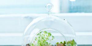 15 idées de jolis terrariums dénichées sur Pinterest