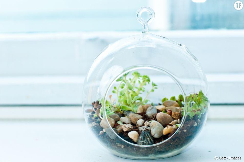 20 idées de terrarium dénichées sur Pinterest