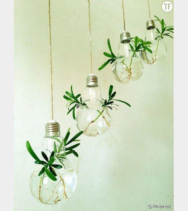 Un terrarium ampoule