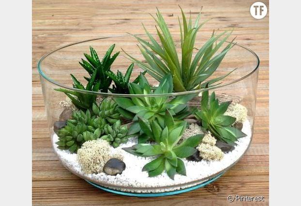 Un terrarium tout vert