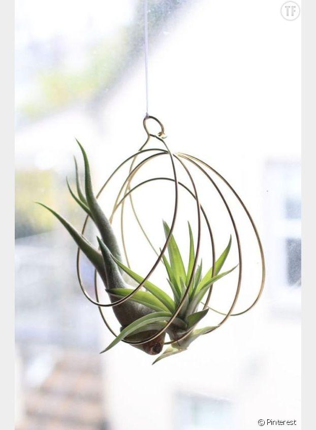 Plante suspendue