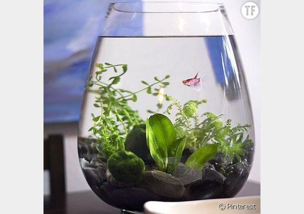 Le terrarium aquatique