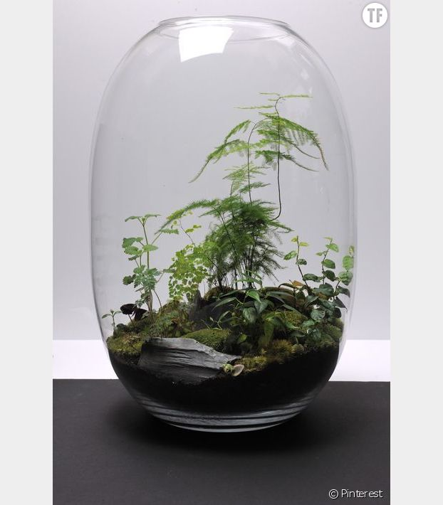Un terrarium tropical