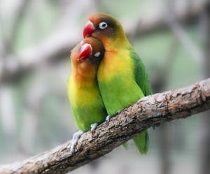 Etre amoureuse pourrait nous empêcher de choper un rhume