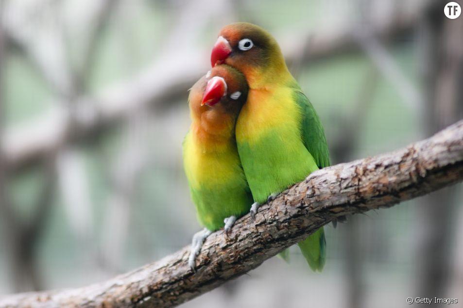Tomber amoureuse pourrait nous empêcher de choper un rhume