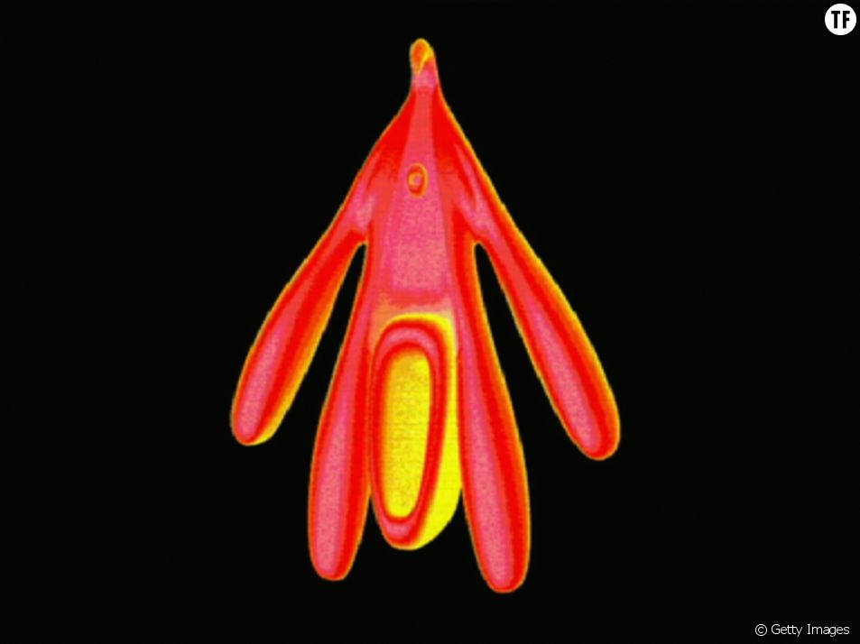 Un clitoris