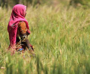 En Inde, les coupeuses de canne à sucre forcées à une ablation de l'utérus