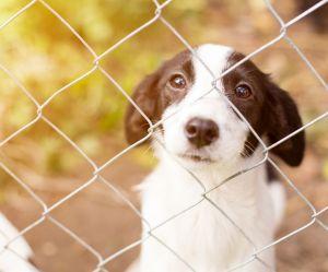 Que faire pour lutter contre les abandons d'animaux cet été ?