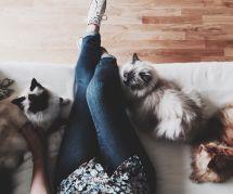 """Et si vous arrêtiez de nous gonfler avec les """"folles à chats"""" ? (merci)"""