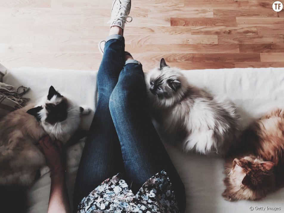 La folle aux chats n'existe pas !
