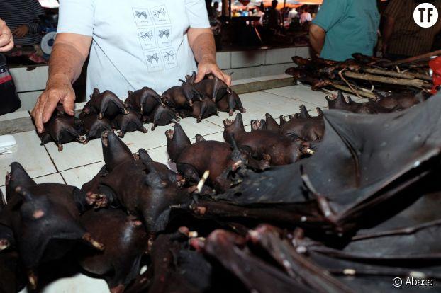 Chauve-souris vendues sur un marché de Berimana, en Indonésie, 8 février 2020