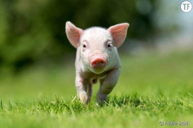 Adopter un animal de ferme